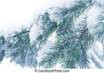 Snow-covered pine forest. Christmas