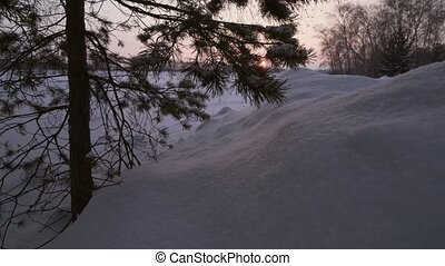 Snow-covered pine in snow at sunset stock footage video