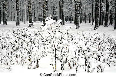 Snow-covered plants against the background of a winter forest