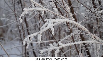 snow covered plants - bush and plants covered with snow and...