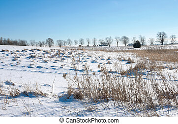 Snow Covered Prairie of Spring Lake Park Reserve