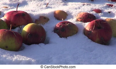 Snow covered red apples on farm garden table on sunny winter...