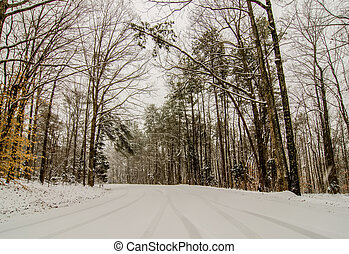 snow covered road and trees after winter storm