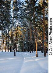 Snow covered road in winter pine forest landscape