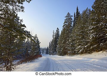 snow-covered road next to the pine forest under a blue sky