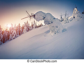 Snow-covered small fir-trees in the mountain forest at sunrise