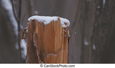Snow-covered stump in winter forest.