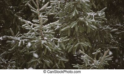 Snow-covered tree branch in snowfall