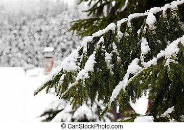 Snow-covered tree branch  - Snow-covered tree branch