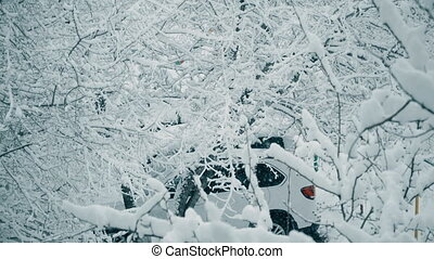 snow-covered tree branches after snowfall