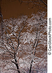 snow covered tree branches in the light of street lamp