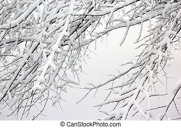 snow-covered tree branches in winter