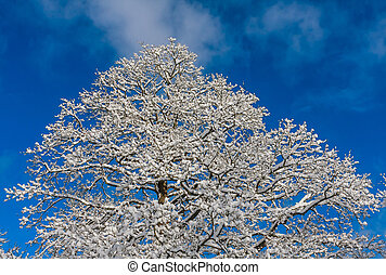 Snow covered tree in the winter park