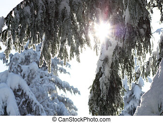 Snow-covered tree on a sky background .