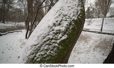 Snow covered tree trunk in the park