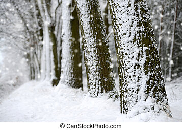 Snow covered tree trunks.