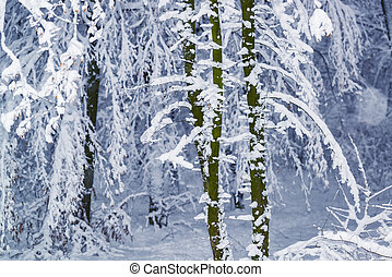 Snow covered trees after heavy snowfall.