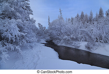 Snow-covered trees along the banks of the creek