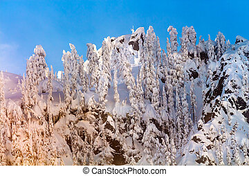 Snow Covered Trees Become Sticks High Snow Mountain Cascade Mountains Snoqualme Pass Washington