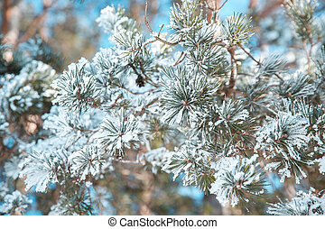 Snow-covered trees in frost in the forest. Winter in the country.