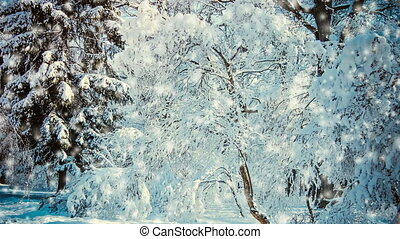 Snow-covered trees in the forest