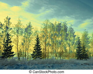 Snow-covered trees in the sunset light