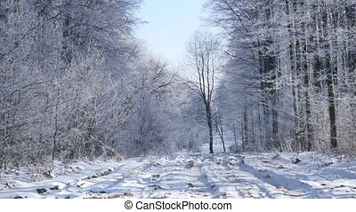 Snow covered trees in the winter forest with road