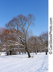 Snow-covered trees in urban park