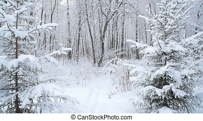 Snow covered trees in winter forest