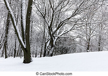 snow covered trees in winter park after snowfall