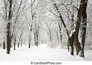 Snow-covered trees in winter park
