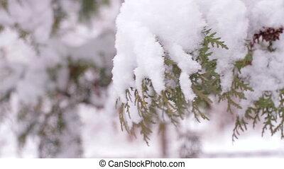 Snowy winter. Good New Year spirit.