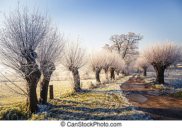 Snow covered trees, winter landscape