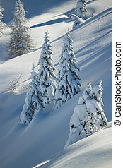 snow covered treesDolomites in wint
