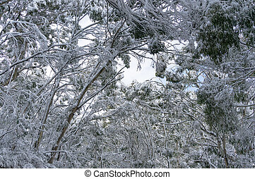 Snow covered treetops. Winter landscape