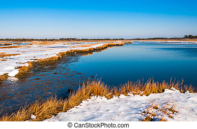 Snow covered wetland at Assateague Island National Seashore, Maryland.