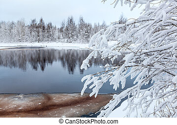 Snow-covered white branches of tree on winter lake shore