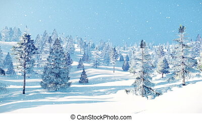 Snow covered winter fir forest at snowfall 4K - Motion...
