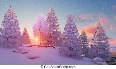 Snow covered winter firs at sunset 4K
