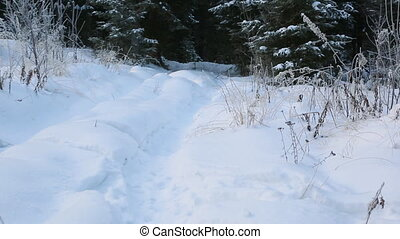Snow-covered winter path in forest