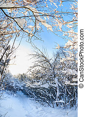 Snow covered winter trees