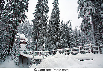 Snow covered wooden bridge in winter pine forest