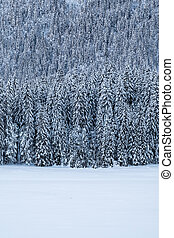 Snow covert forest near frozen lake Fusine in winter