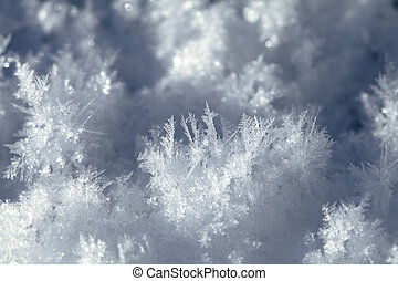 Snow crystals on the ground