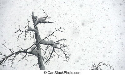 Snow Cyclone - From the sky slowly falling snow flakes on a...