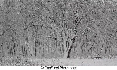 Snow day in the winter woods.