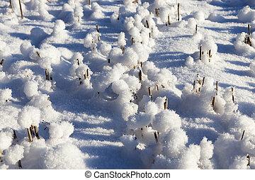 Snow drifts in winter