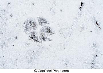 snow., empreinte, chien