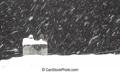 Snow Fall 4 HD 1080p