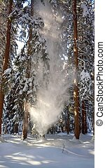 Snow fall from tree